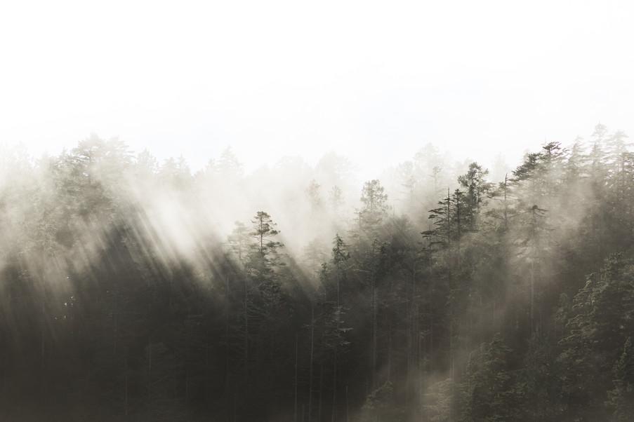Tofino Photography by Jenni Lisacek