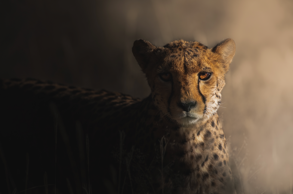 Photo Safari Namibia with Artica Studios