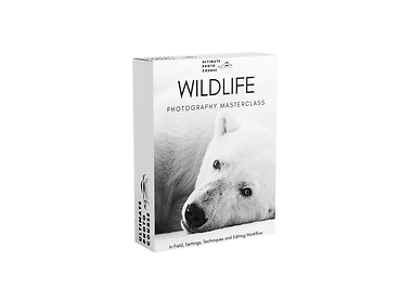 Ultimate Wildlife Photography Course