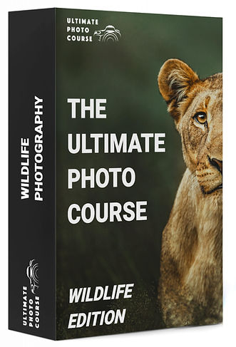 The Ultimate Wildlife Photography Course
