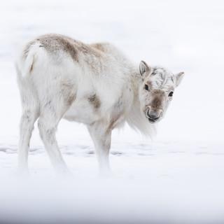 Polar Bear-5.jpg