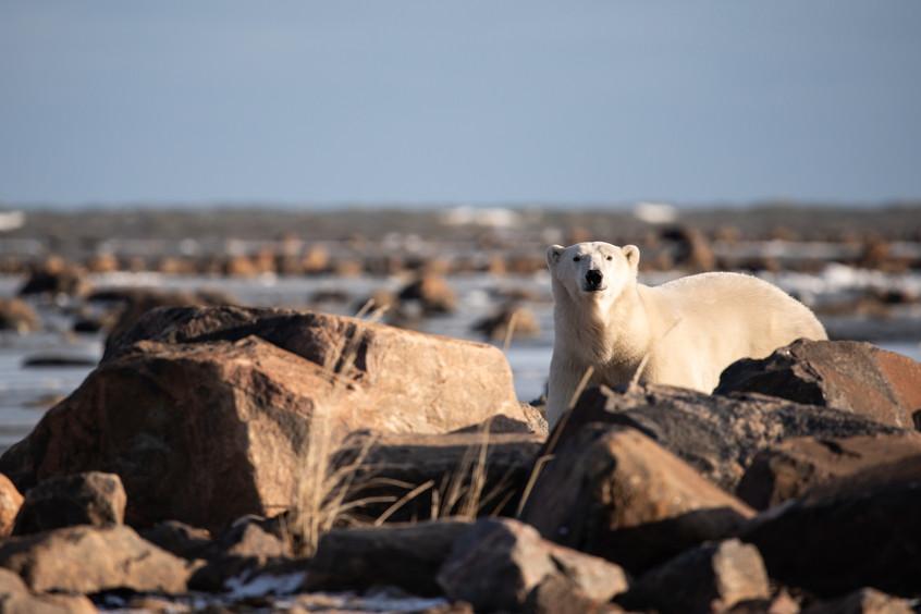 Tundra Wildlife Jenni Lisacek-20.jpg