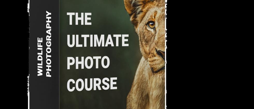 Wildlife Photography Tutorial Ultimate P