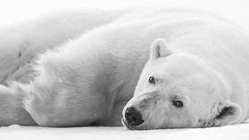 Chase Teron Polar Bear Expeditions