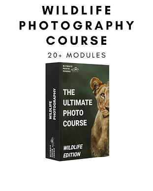ultimate photo course (2).png