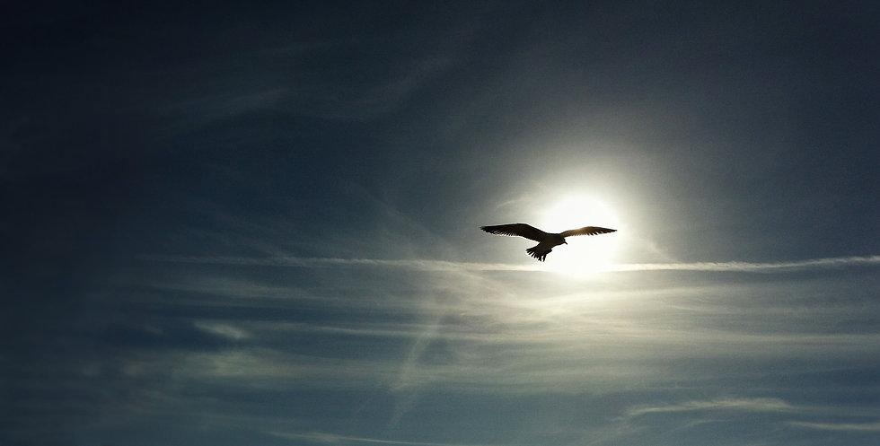Bird-flying-09.jpg