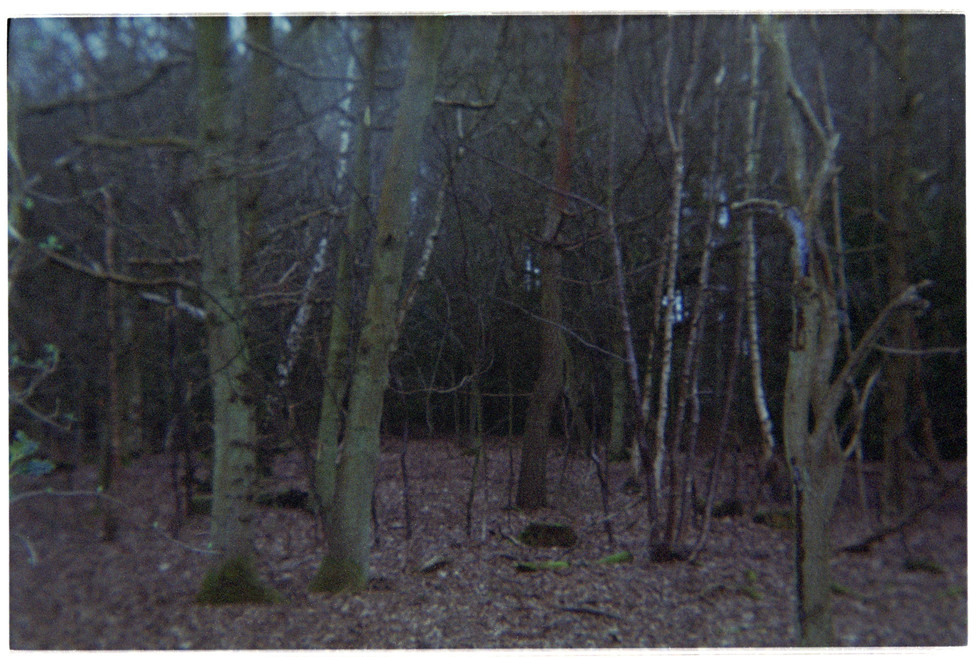 Alone in the woods part 4