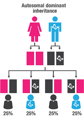 Autosomal dominant inheritance.PNG
