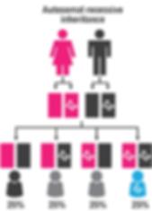 Autosomal recessive inheritance.PNG