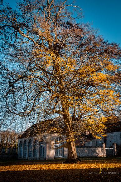 abbaye de chaalis.JPG