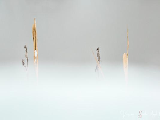 LA PHOTOGRAPHIE - UN ART DE VIVRE