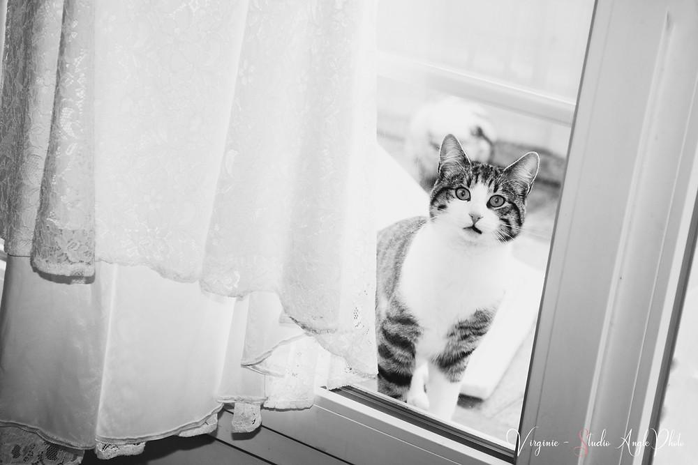 le chat regarde par la fenetre les preparatifs de la mariee