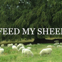Feed My Sheep!