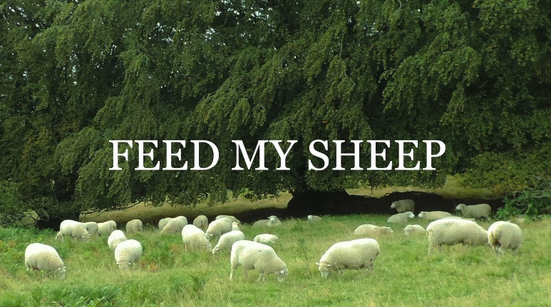 Feed My Sheep Image.jpg