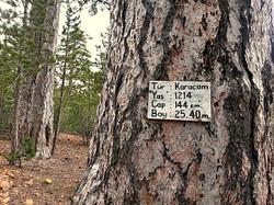 Tarihi orman