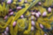 Petronella-16.jpg