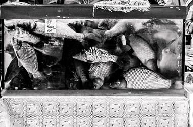 Ma chère Russie  Depuis 2004, Sandrine Elberg a régulièrement voyagé en Russie, sur le territoire de ces ancêtres, les russes blancs.  Il y a onze ans, l'artiste a découvert une partie de l'histoire de son nom patronymique. Désormais, elle place son travail photographique de portraitiste dans la perspective d'une identité russe qu'elle ne veut oublier, et qui lui fait assumer autant ses thèmes de travail que leurs expressions plastiques.  Pour l'artiste, l'histoire de ce pays est complexe et recèle une multitude de sentiments et de contradictions ; de l'étrangeté et de la révolte - pour l'artiste, cet état est tout aussi enivrant qu'inclassable.  Sandrine Elberg place ses rencontres, ses personnages (en majorité des femmes), ses décors, entre illustration et évocation picturale.Immobiles ou prises sur le vif, ces photographies sont une vision d'auteur : l'âme du peuple russe d'aujourd'hui. Le temps dans ses photographies est immédiatementsuspendu, la vie de ces personnages n'est plus que symbolique.Chaque environnement qui au départ estbienréel devientintemporel, théâtral et in fine irréel.