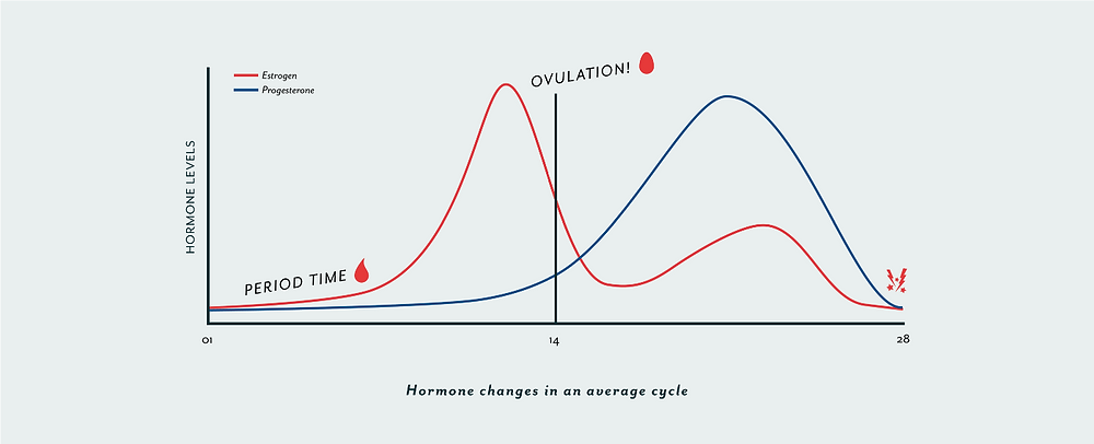Chart of Hormonal Rhythm