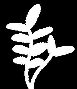 Leafy Plant Drawing
