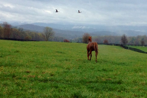 Horse retirement farm