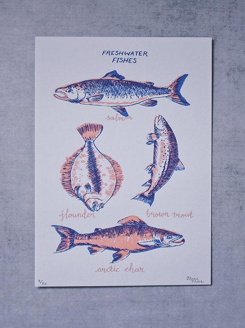 Freshwater Fishes screenprint
