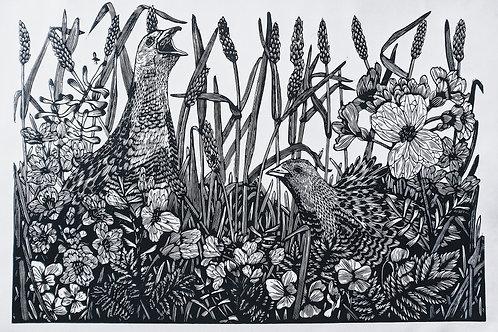Corncrakes and Cuckooflowers (in black) ~ original linocut