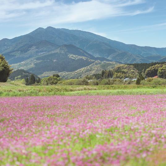 紫尾山_SHI6035.jpg
