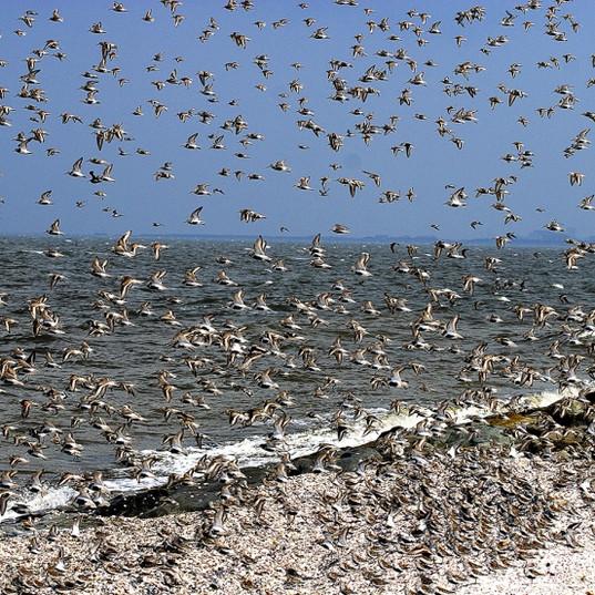 水鳥.jpg