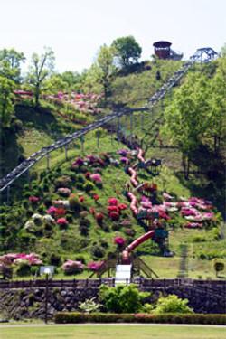 四季折々の花が美しい「高取山公園」