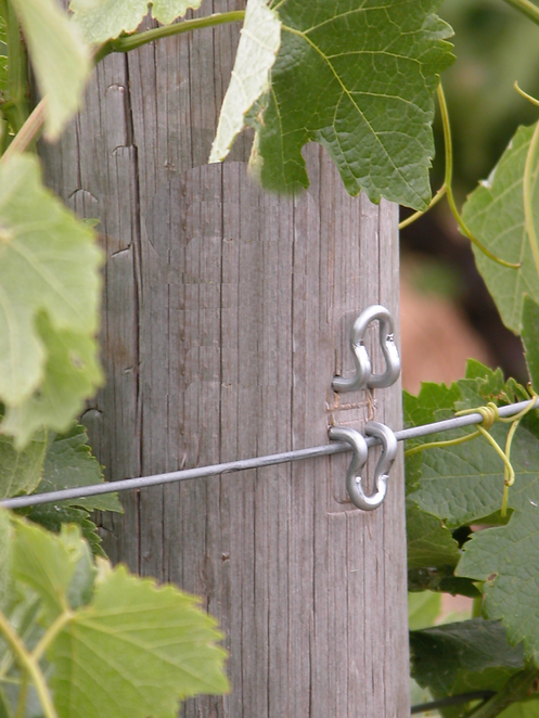 Tuckaway Staples in vineyard post