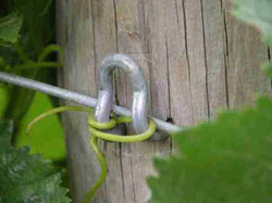 Installed - A Friendly Tendril