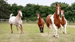 DHP Herd