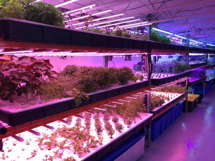 Fresh Impact Farms