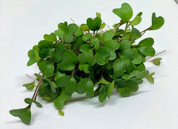 Kohlrabi Microgreens