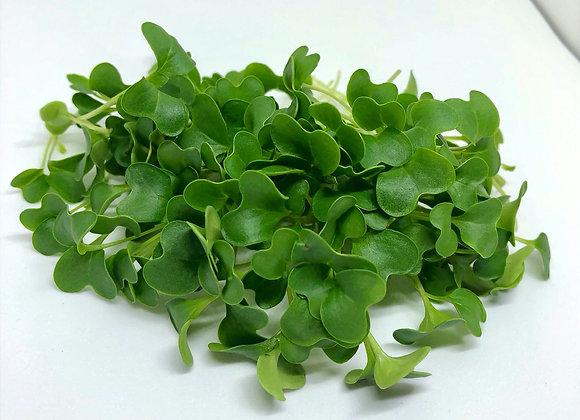 Cauliflower Microgreens