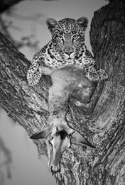 pe-leopardjpg
