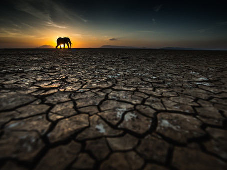 The Art Of Wildlife Photography Series