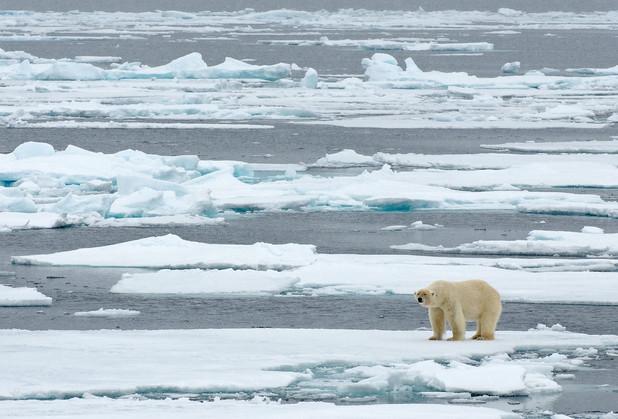 PolarBear_BAA0971.jpg