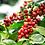 Thumbnail: Cafe Tradicional O Batedor 500gr