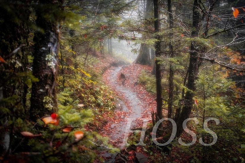 Autumn Along the Appalachian Trail