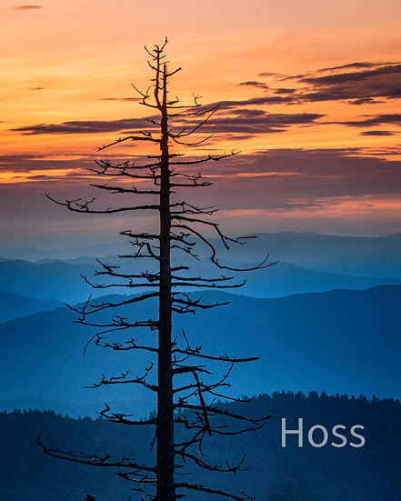 The Dome Comb Tree at Sunrise