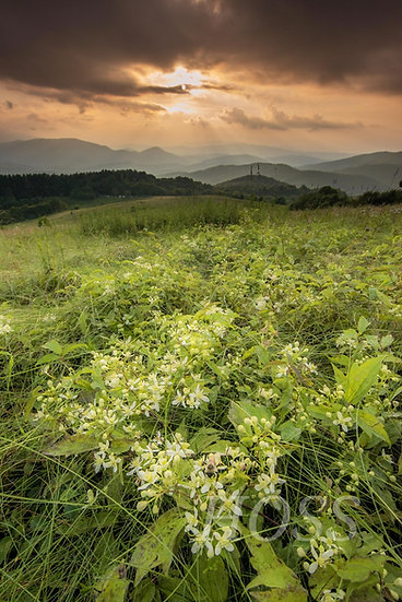 The Fields of Max Patch