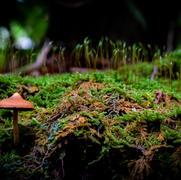 Mushrooms on Bote Mtn