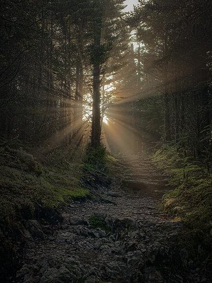 Light Rays on the Boulevard Trail