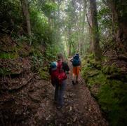 Bote Mtn Trail