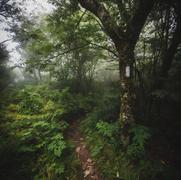 Appalachina Trail