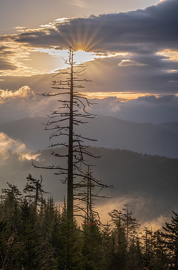 Moody morning on Clingmans Dome