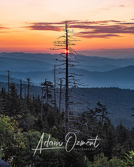 Sunrise from the Dome Comb Tree