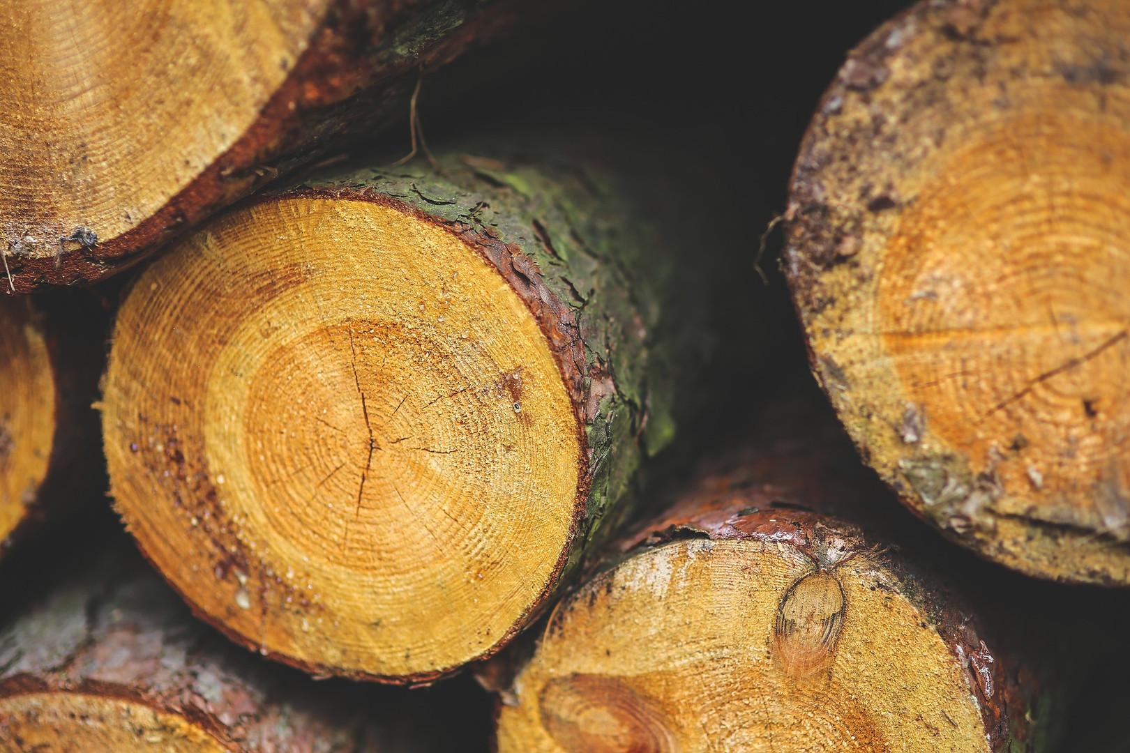 wood-791403_1920.jpg