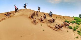 Mongolia-deser-camel-herding.jpg